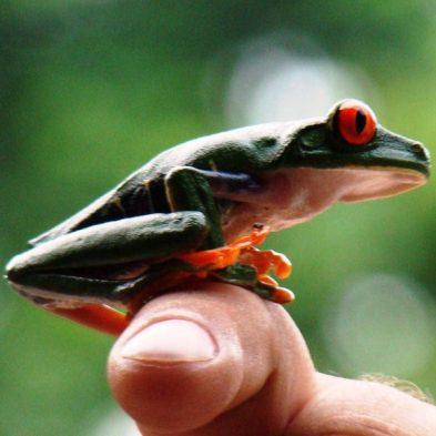 Costa-Rica-Nature-Travel.jpg