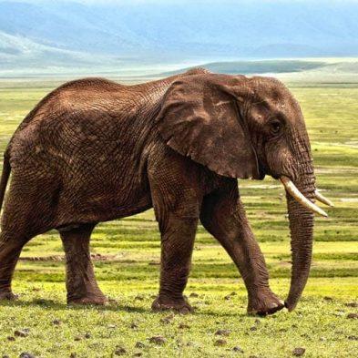 african-elephant-safari-photography.jpg