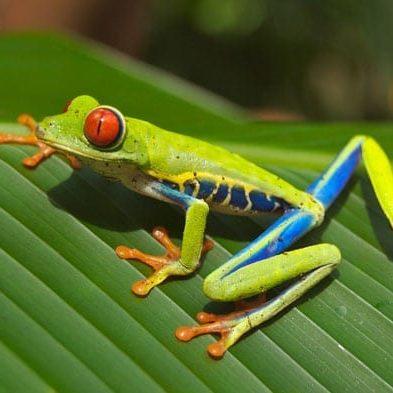 tree-frog-panama.jpg